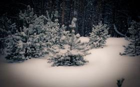 Обои зима, снег, ель