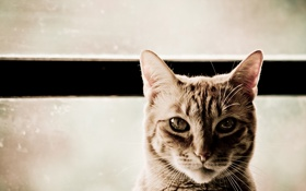 Обои кот, cat, кошка