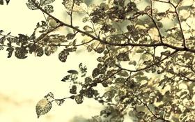Обои листья, макро, свет, ветки, природа, листва, размытость