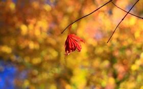 Обои красный, лист, фон, осень ветки