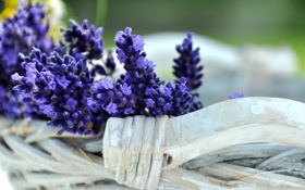 Обои дерево, букет, flowers, лаванда, lavender