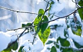 Обои зима, листья, снег, ветки, мороз