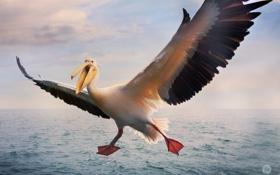 Картинка птица, крылья, баклан, иоре