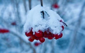 Картинка зима, снег, ветки, ягоды, красные