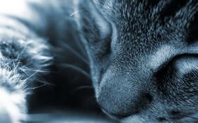 Картинка кот, макро, сон