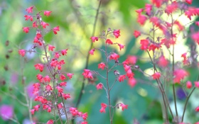 Картинка макро, цветы, растение, ветка, стебель