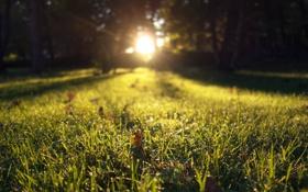 Обои зелень, трава, листья, солнце, лучи, свет, закат