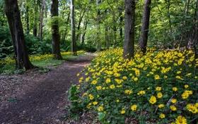 Обои дорога, лес, цветы, природа