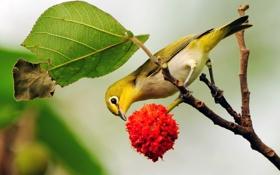 Обои птица, цветок, ветка, лист
