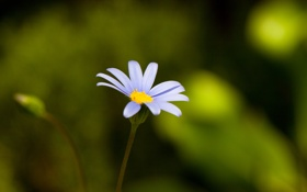 Картинка цветок, синий, зеленый, блики, фон, один, жёлтая