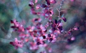 Картинка листья, ветка, размытость, шипы