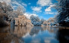 Картинка облака, деревья, зима, снег, вода, озеро, гладь