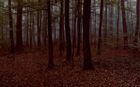 Обои листья, лес, деревья, фото, природа, вечер, дерево