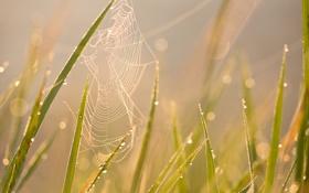 Обои лето, трава, солнце, макро, роса, блики, утро