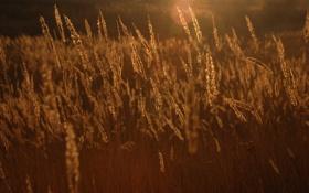 Обои поле, трава, закат, Осень