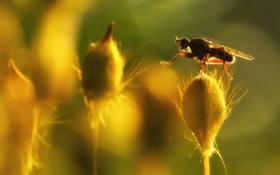 Обои цветок, макро, природа, муха
