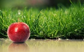 Обои Apple, red, Grass, Shadow