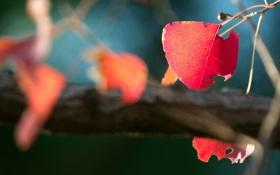 Картинка осень, листья, солнце, макро, лучи, деревья, природа