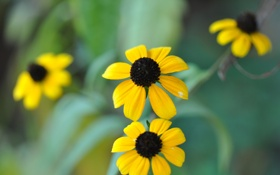 Картинка осень, цветы, природа, ромашки