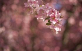 Картинка цветы, блики, фон, ветка, весна, розовые, цветение