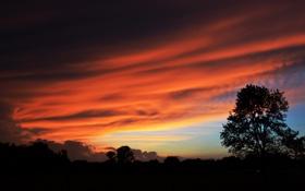 Картинка небо, пейзаж, ночь, дерево