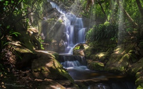 Обои лес, деревья, природа, водопад, джунгли