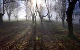 Картинка лес, свет, деревья, туман, утро