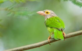 Картинка птица, цвет, ветка, перья, клюв, хвост
