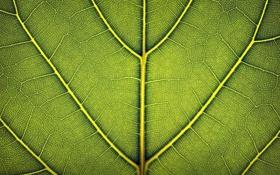 Обои листья, макро, фото, обои, листок