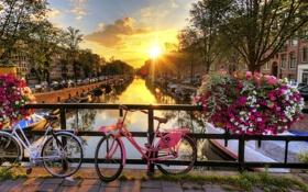 Обои солнце, закат, цветы, мост, велосипед, город, ограда