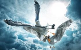 Обои облака, птицы, чайки, камера
