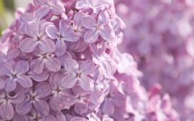 Обои макро, цветы, природа, нежность, цвет, ветка, весна