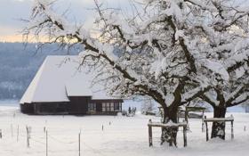 Обои зима, пейзаж, снег, деревья