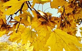 Обои Лист, Осень, hddraw, Обои Осень