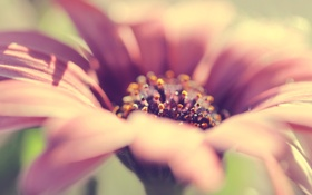 Картинка макро, цветы, красиво, нежно