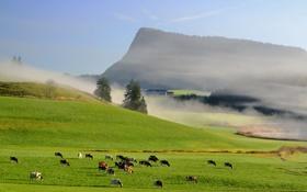 Картинка небо, трава, горы, туман, коровы, луг