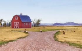 Обои солнечный, небо, поле, ферма, курица, сарай, петух