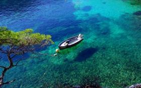 Картинка прозрачность, дерево, лодка, бухта