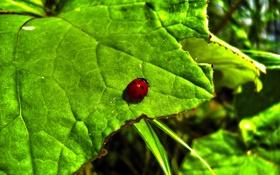 Картинка красный, яркий, природа, лист, зеленый, green, черный
