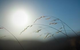 Обои трава, солнце, макро, природа, фото, full hd, обои для рабочего стола