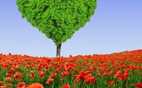Картинка поле, цветы, дерево, сердце, маки, весна, луг