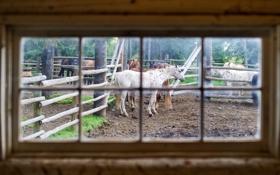 Картинка horses, stable, window glass