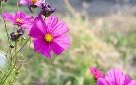 Обои лето, цветы, природа, blur