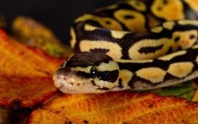 Картинка макро, листок, змея, смотрит