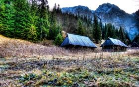 Обои лес, небо, горы, дом, Польша, Poland, Tatra National Park