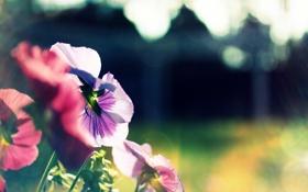 Обои солнце, цветы, природа, блики, обои, растения, размытость