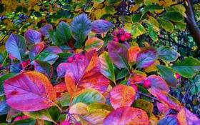 Обои осень, лес, листья, деревья, плоды