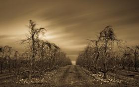Картинка ночь, природа, яблоки, сад, яблони