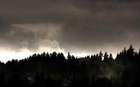 Обои небо, деревья, обои, пейзажи, леса
