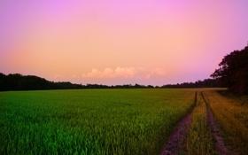 Обои дорога, поле, небо, трава, путь, фото, леса